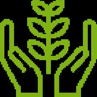 Экологичность деревянных окон okna-fresh.ru